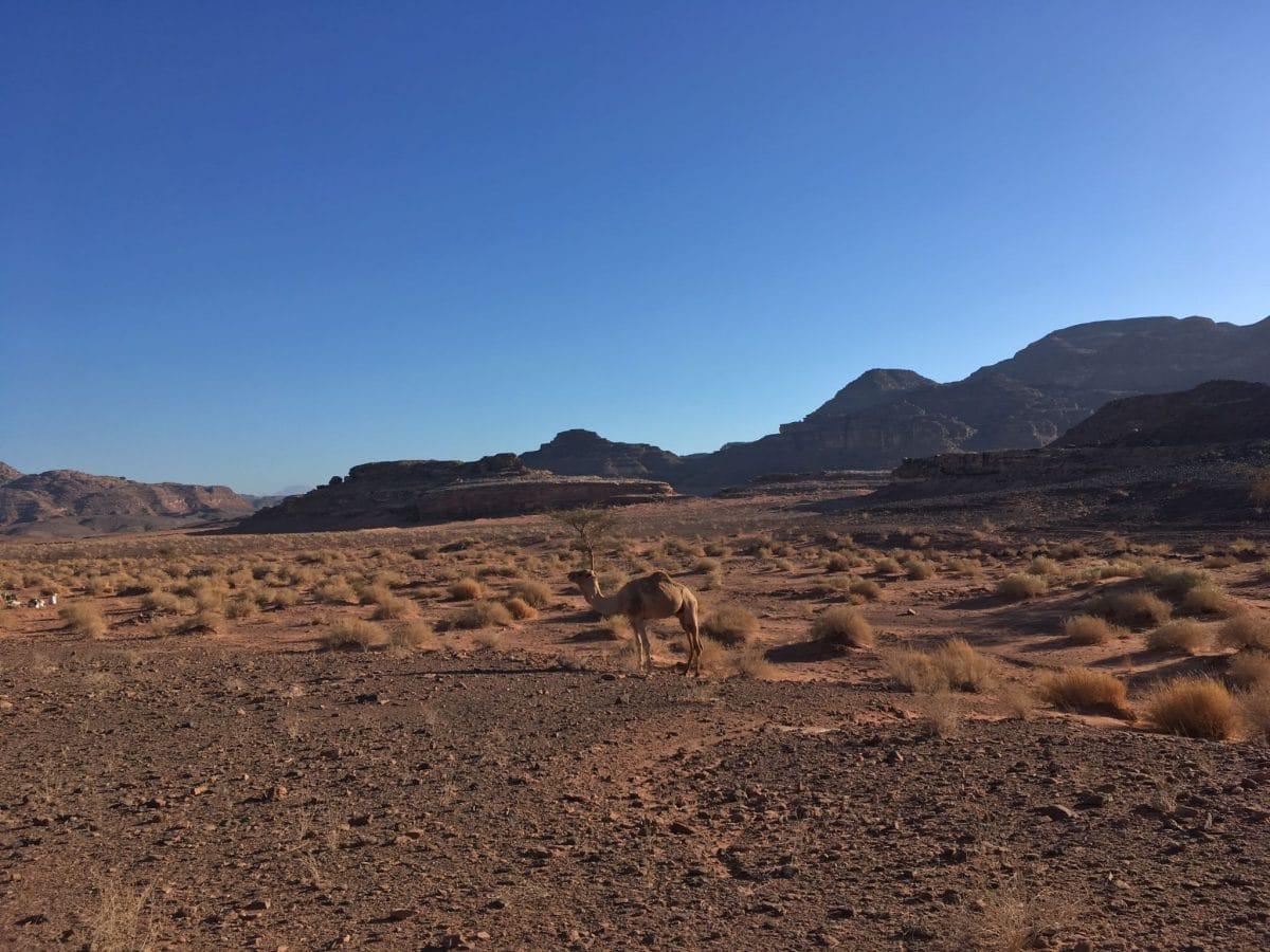 Stille & Einfach Sein in der Wüste Sinai