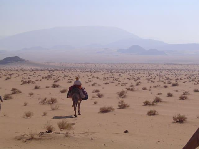 Meditatives Kameltrekking in der Wüste Sinai