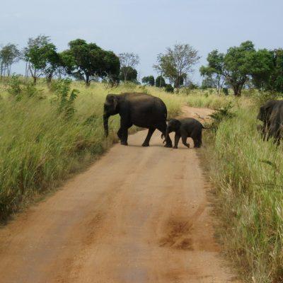 Elefanten, Wandern und Yoga Retreat in Sri Lanka