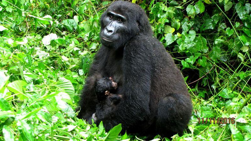 Rundreise Uganda mit Schimpansen- und Gorillatrekking