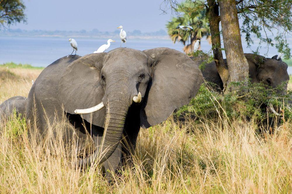 Rundreise Uganda mit Schimpansen- und Gorilla Trekking
