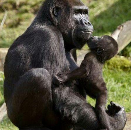klosterreisen_uganda_gorilla_mum_child