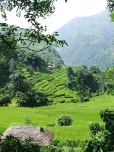 Klosterreisen Nepal Poonhill Trek Reisfelder