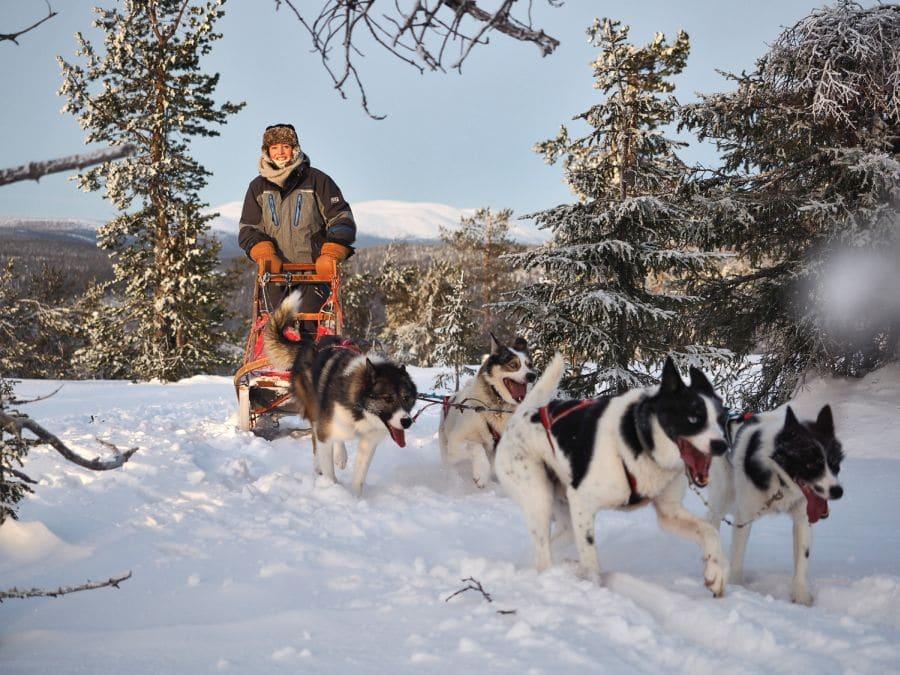 Mit Schlittenhunden durch Lappland, Finnland
